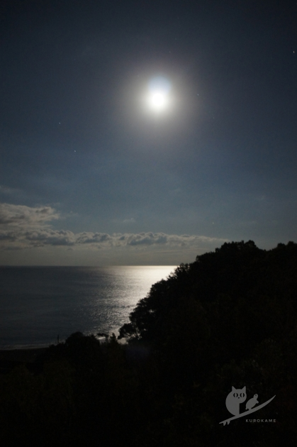 高知中村・平野の海