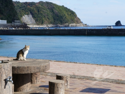 写真:12月24日 中村 イヴは久礼のカツオとブリと漁港ねこと鳴門の夕陽