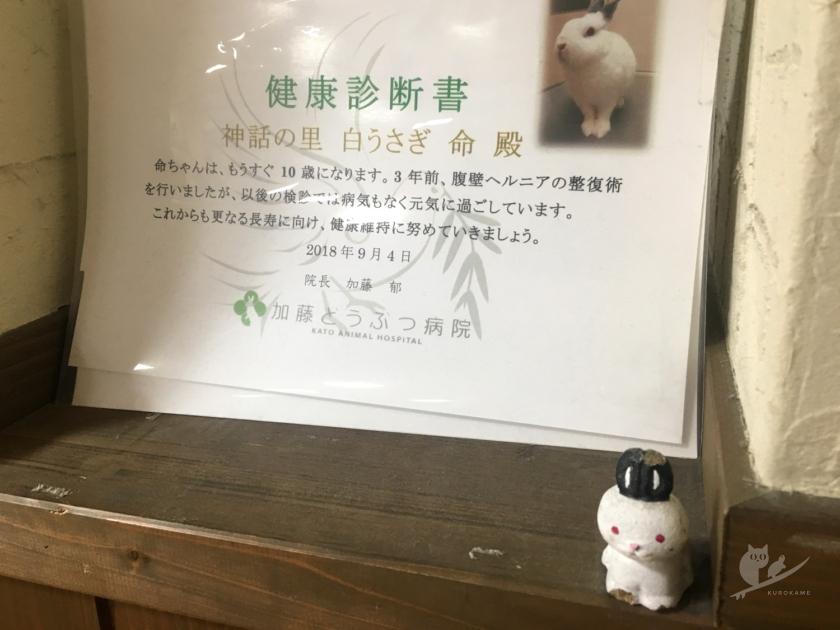 鳥取の道の駅・白兎駅長の健康診断書