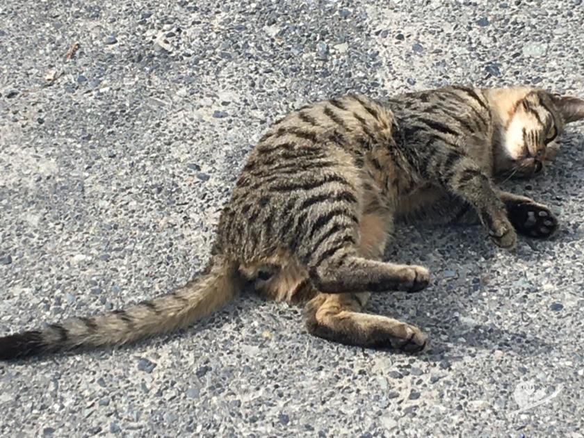 漁港猫のふなちゃん